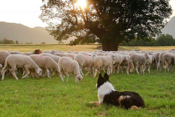 hábitat de la oveja