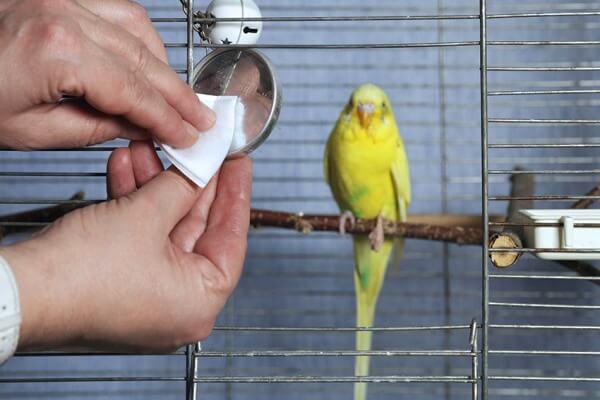limpieza accesorios periquito