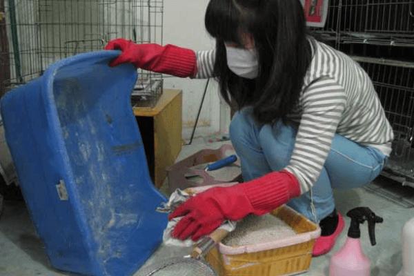Higiene de los Periquitos y su Importancia
