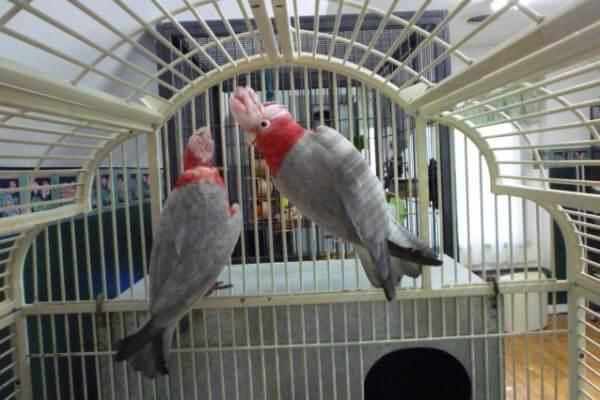 jaulas para cacatúas