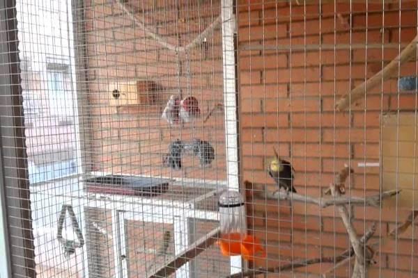 dimensiones aviarios casero cacatúas