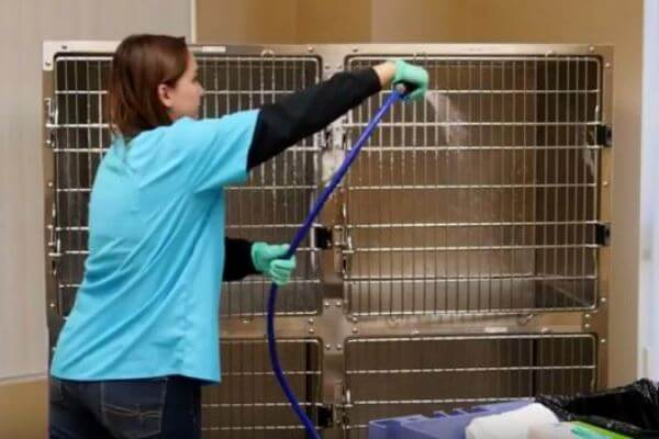 Cómo limpiar la jaula de los periquitos