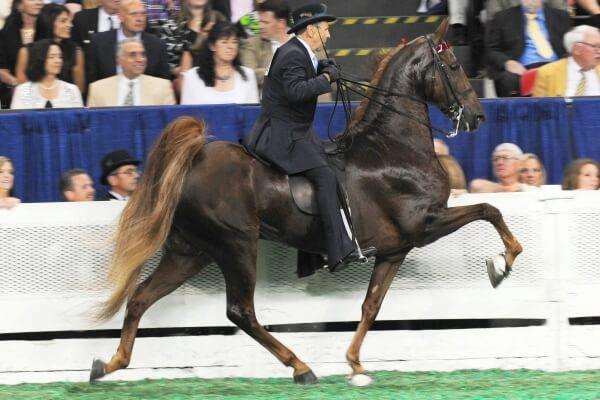 razas de caballos de equitación