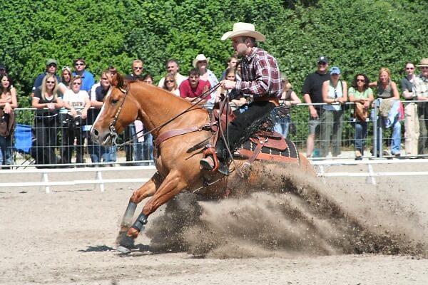 tipos de caballo western