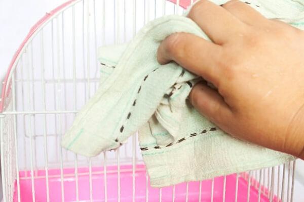 higienizado jaulas periquitos