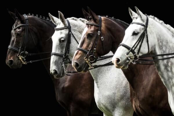 cuántas razas de caballo hay