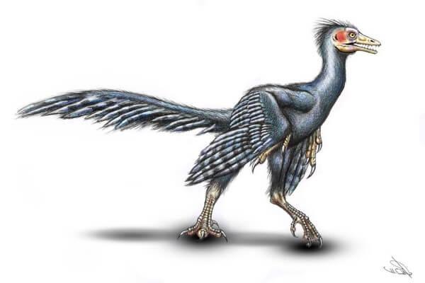 El Archaeopterix es el antepasado de las aves de corral