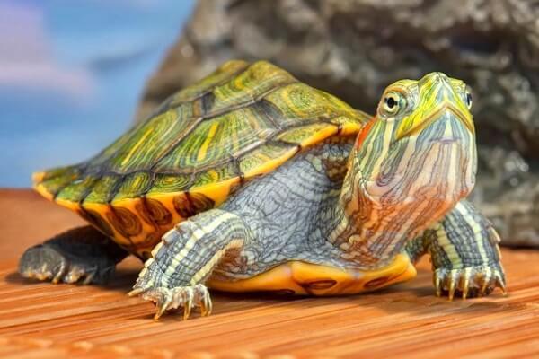 Cómo respiran las tortugas marinas