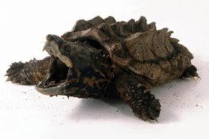 clases de tortuga terrestre