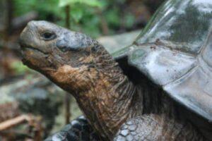 características de las tortugas para niños