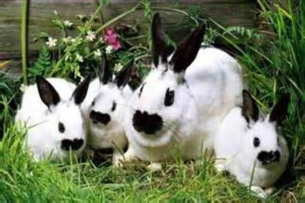 conejos mariposa