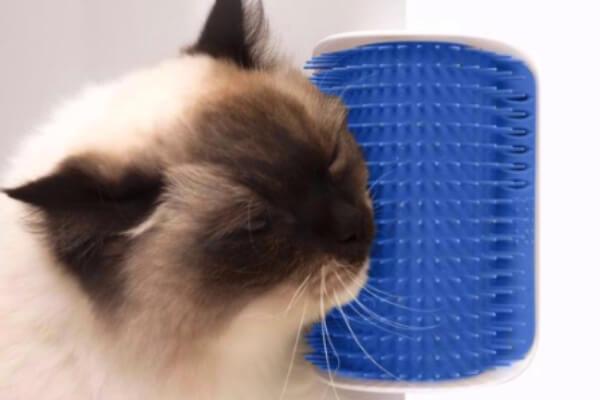 cómo cuidar un gato siamés