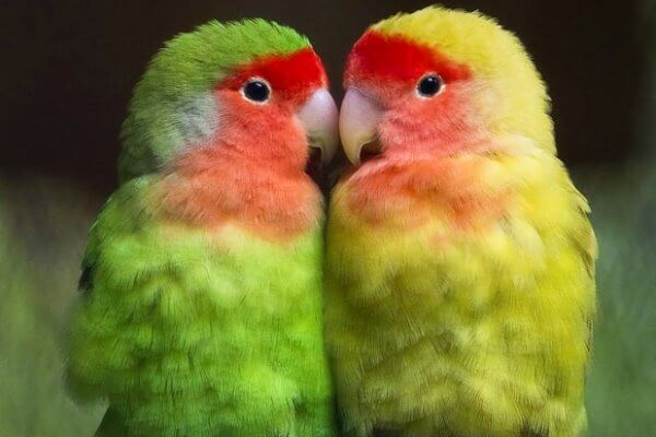 enfermedades de las aves exóticas