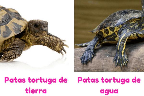 cómo se desplaza la tortuga