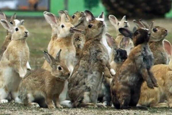 clases de conejos - Existe una gran variedad de razas de conejos domésticos y salvajes.