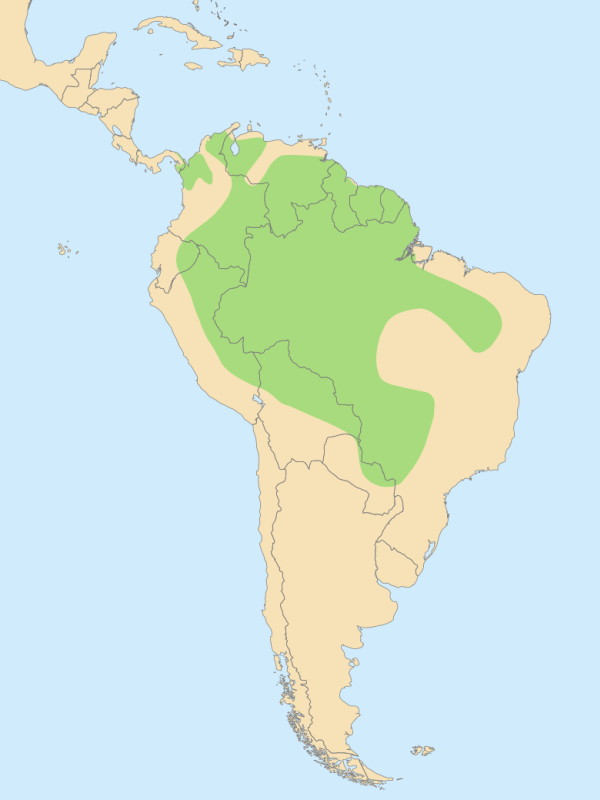 hábitat Ara chlorepterus