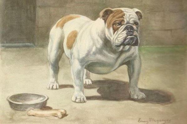 cuál es el origen del bulldog inglés
