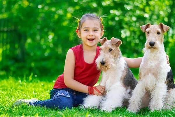 fox terrier y niños
