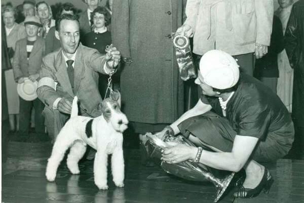 cuál es su origen del fox terrier