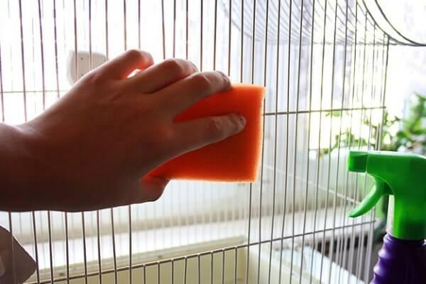 cómo limpiar la jaula de mi inseparable