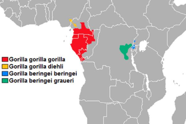 hábitat natural de gorilas
