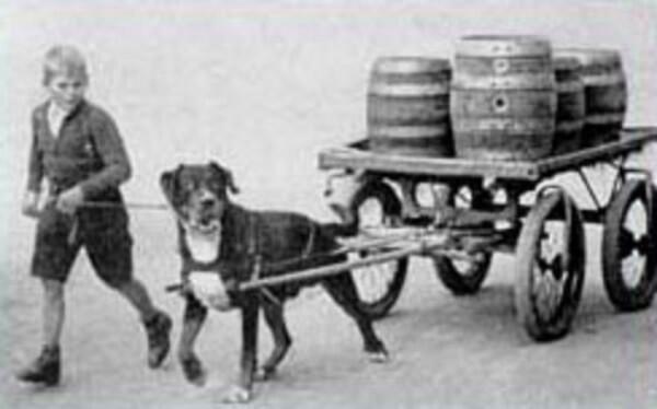rottweiler historia y origen