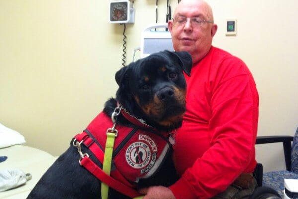rottweiler perro rescate