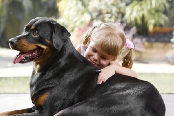 qué comportamiento tiene el perro rottweiler