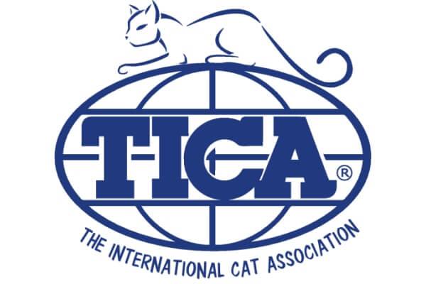 club razas de gatos