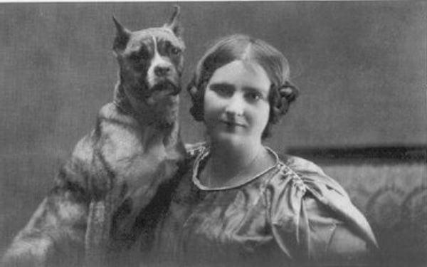 perro bóxer historia