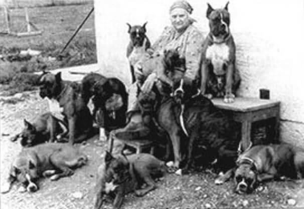 origen e historia del perro bóxer