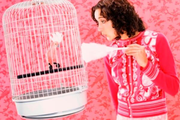 cómo limpiar la jaula de un loro