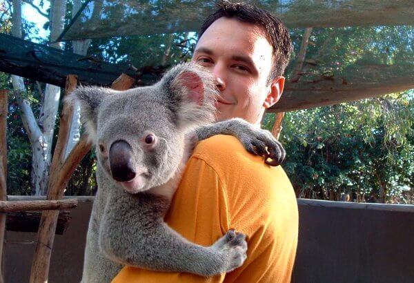qué tamaño tiene un koala
