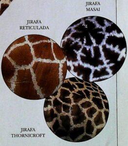 ¿las jirafas tienen el mismo color?