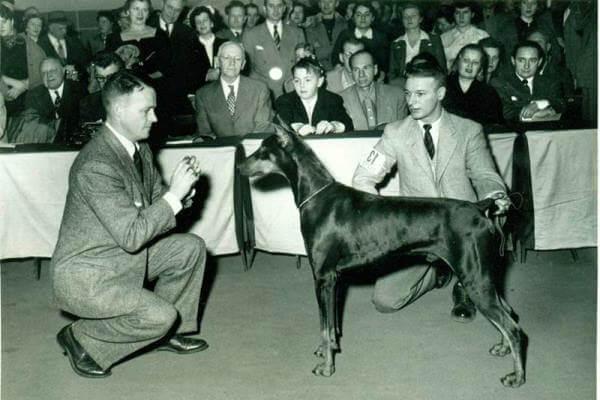cuál es la historia del perro dóberman