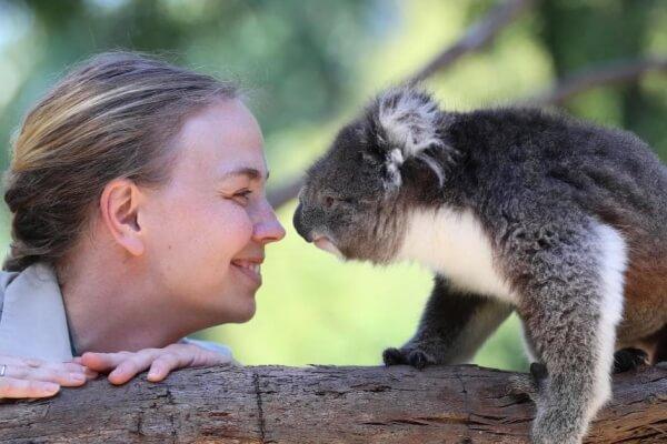 relación hombre y koala