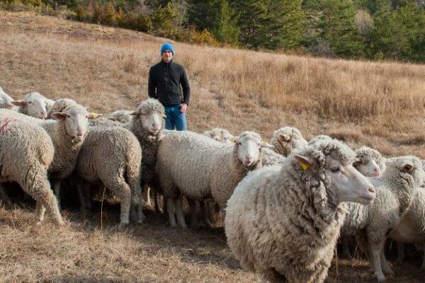tipo Oveja Merina de lana del este