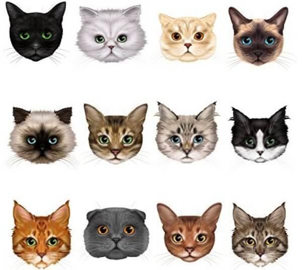 razas de gatos forma cabeza