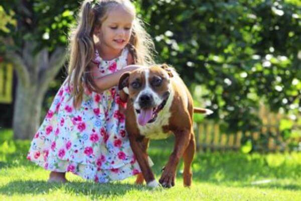 cómo se comporta el american Staffordshire terrier