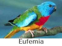eufemia características