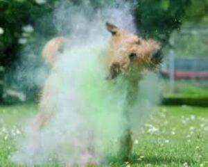 cómo bañar a un irish terrier