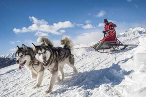 cómo adiestrar a un alaska malamute