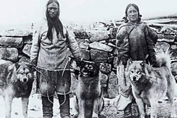 alaska malamute historia
