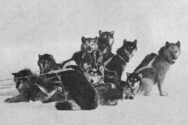 cuál es el origen del perro alaska malamute
