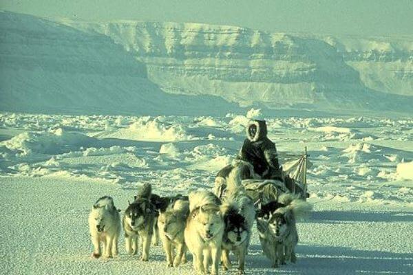 de qué país es la raza de perro alaska malamute