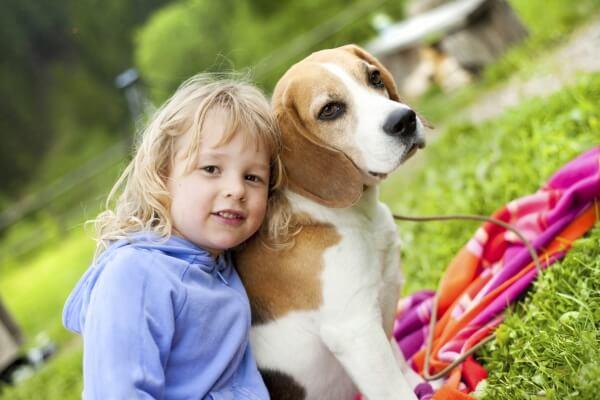 qué personalidad tiene el perro beagle