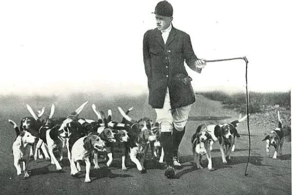 de qué país es la raza de perro beagle