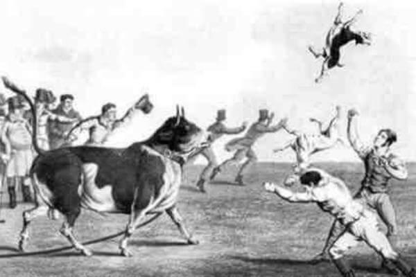 cuál es el origen de la raza bull terier