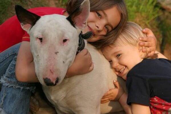 bull terrier mni raza carácter