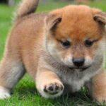 Imágenes y fotos de perros
